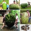 30/gigante bolsa de Semillas de La Sandía, delicioso Sabor dulce semillas de Verduras y frutas muy gigante envío libre