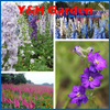 Rocket Consolida Larkspur Delphinium Blue Flower Seeds Rare Flower Tree Seeds For Home Decoration 1500 Pcs