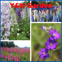 Rocket Consolida Larkspur Delphinium Blue Flower Seeds Rare Flower Tree Seeds For Home Decoration 1500 Pcs