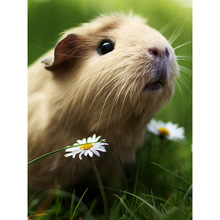 diamond painting guinea pig, paiting,full drill