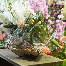 Бонсай бесплатная доставка многогранник прозрачное стекло настольная сочные завод микро-волокна пейзаж террариум