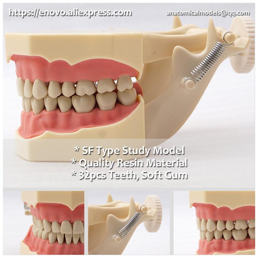13009 DH107-1 SF Type Similar Frasaco Black Teeth Study Model, Medical Science Educational Dental Teaching Models 13007 dh106 hard gum 32pcs teeth standard jaw model medical science educational dental teaching models