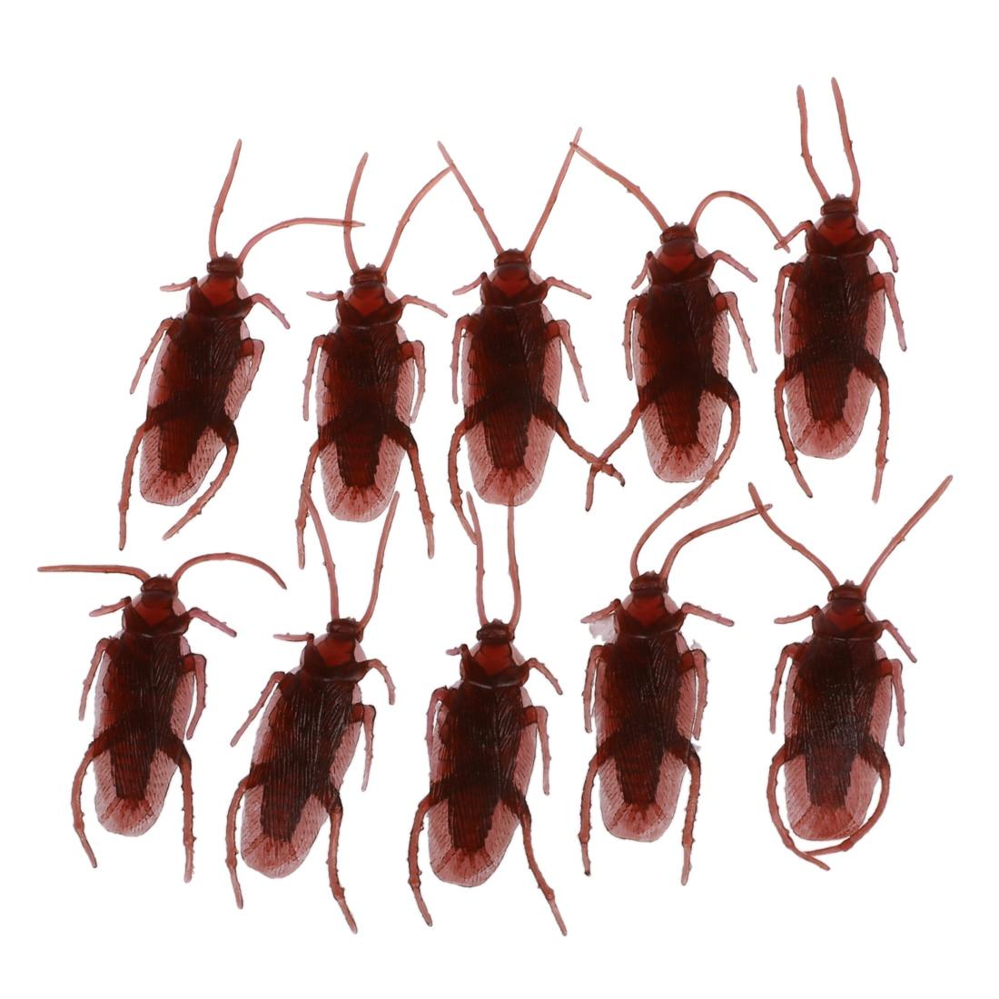 cock-roache-bugs