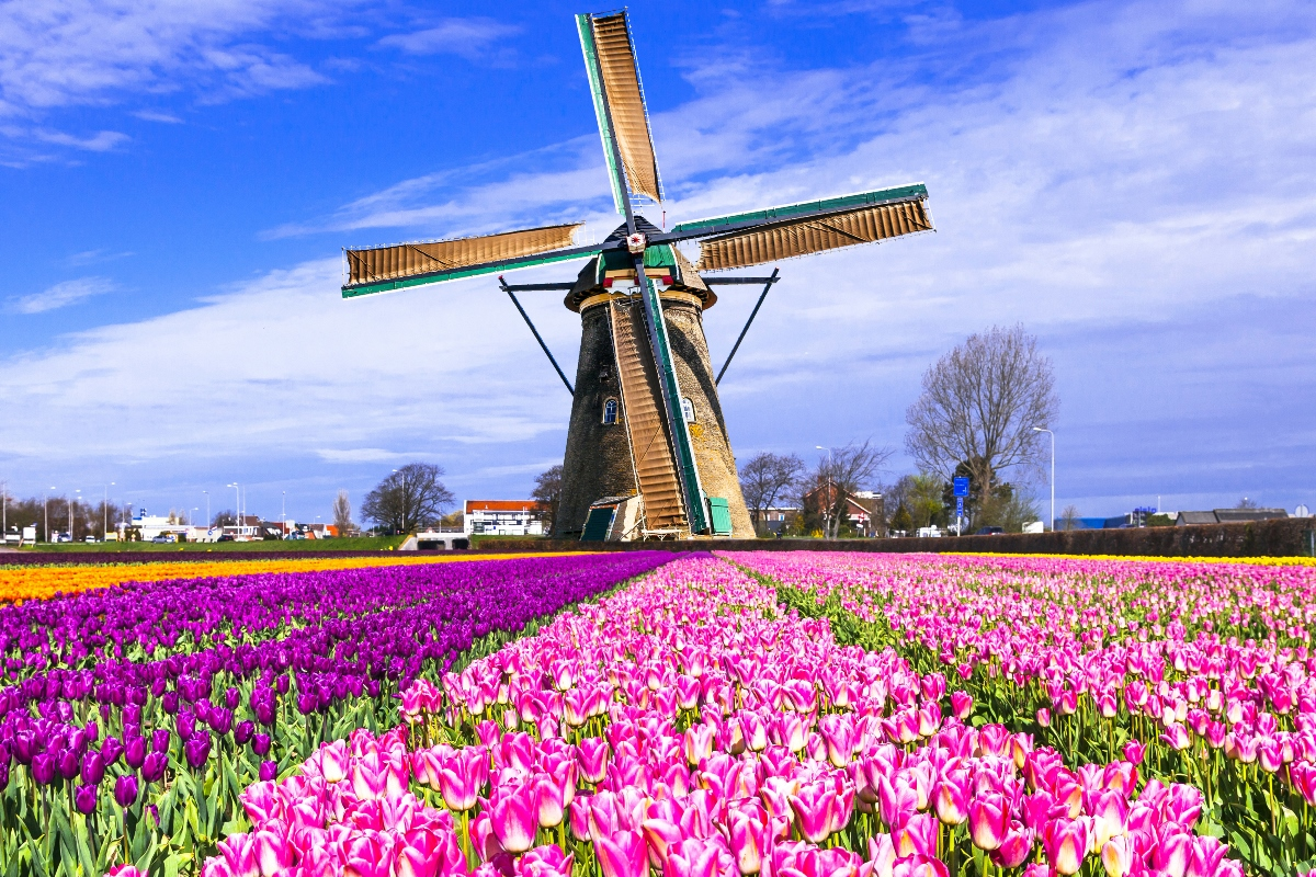 Keukenhof Netherlands Lisse colorful field mill tulips living room home wall art decor wood frame fabric poster MM14