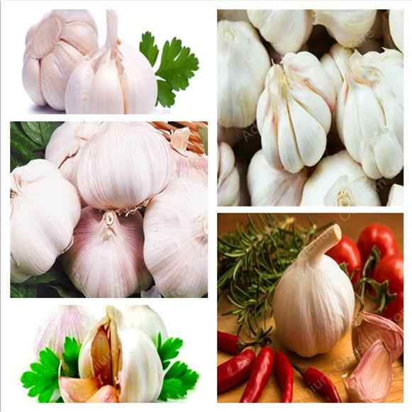 Hot sale 500 pcs Garlic Bonsai Vegetable Pure And Natural And Organic Healthy And Delicious Seasoning Spicy Vegetable free ship
