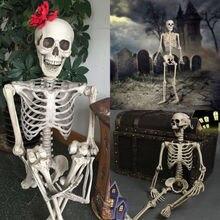 Compra Plastic Anatomy Skull Y Disfruta Del Envío Gratuito En