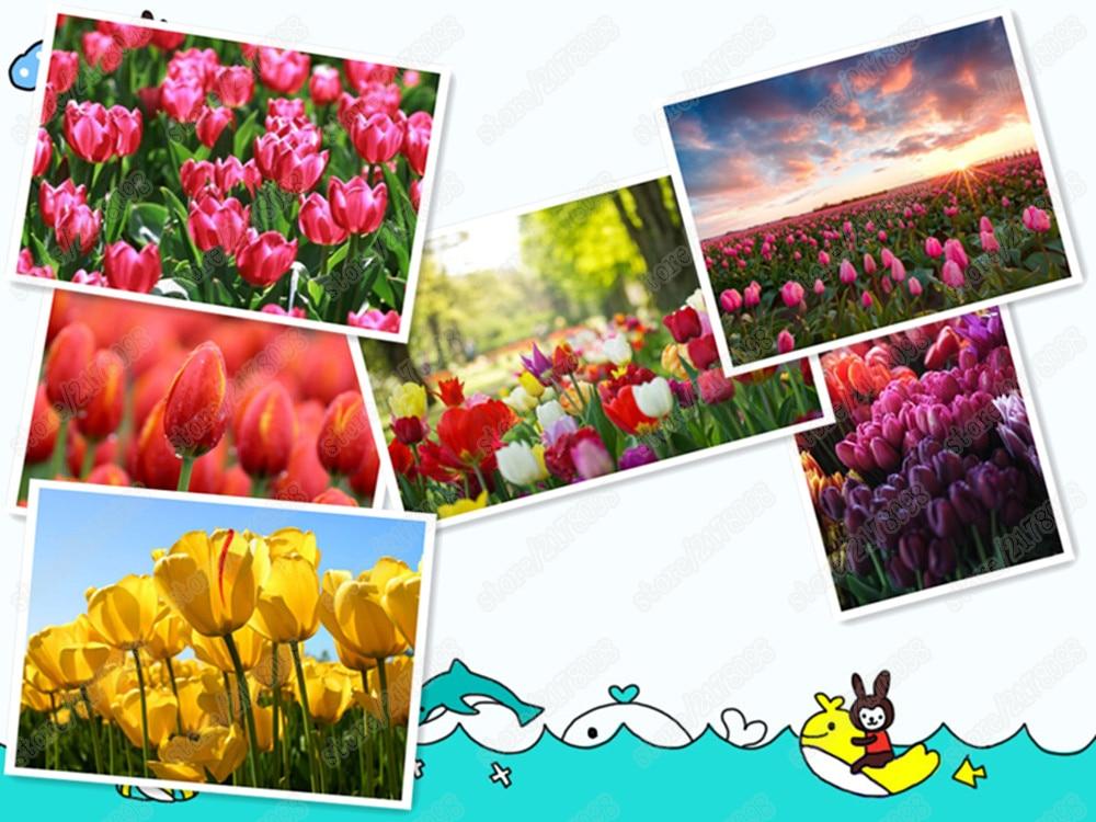 Achetez en gros plantation en pot tulipes en ligne des for Plante 21 en ligne