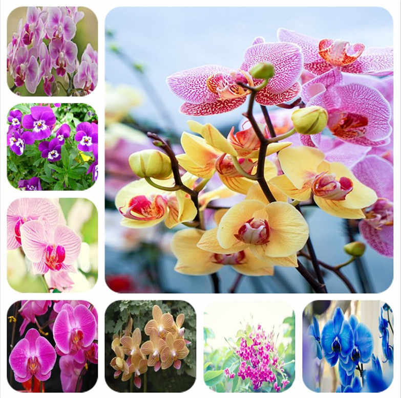 2019 Big promotion 100 rare large flower orchids rare phalaenopsis spring orchids bonsai planted in the garden free shipping