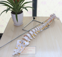 Lumbar Spine Model,Spine Model,1:1 Spinal Nerve Model,Model of Human Spine