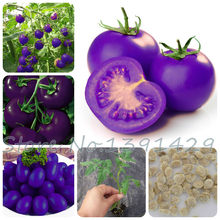 Purple sacred fruit tomato plants vegetables and fruits bonsai 100 pcs / packing for home garden * farm plants easy to grow bons(China)