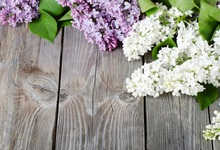 Laeacco Wooden Board Blooming Flowers Spring Scenic Photography Background Customized Photographic Backdrops For Photo Studio