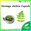 herbal extract powder moringa oleifera leaf powder capsule 500mg*800pcs