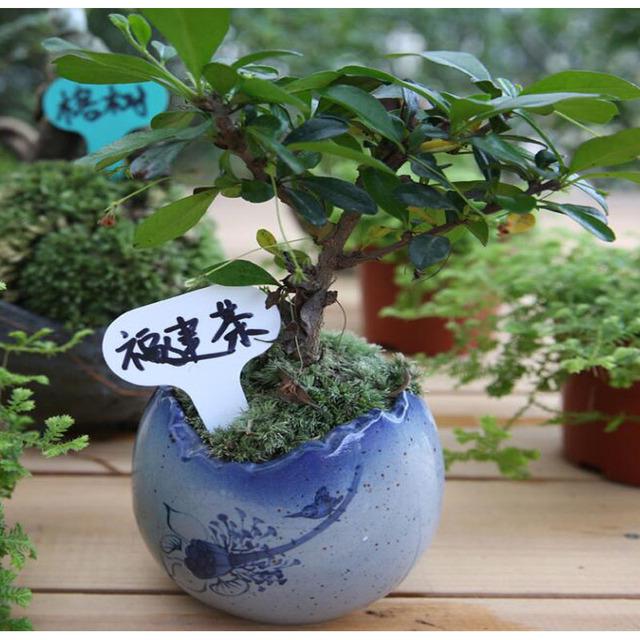 50 pcs Nursery Premium Label Plastic Plant Type T Label Garden Plant Pot Planter Vegetable Label Tag