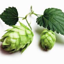 50 PCS Hops Plant Humulus Lupulus The Brewing beer plant or tea herb brew GERMAN MAGNUM HOP SEED free shipping(China)