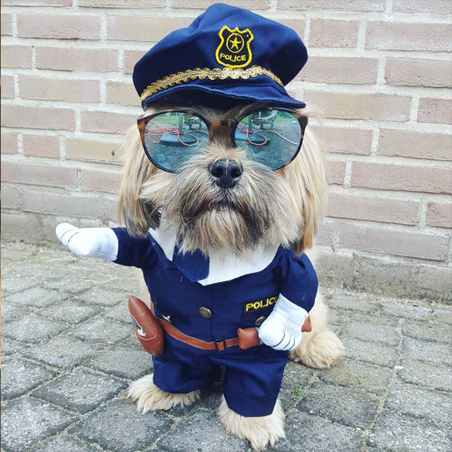 Pet Costumes ideal to show your Pet on Instagram, Twitter or Facebook