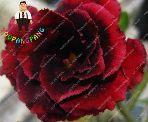 online buy wholesale red exotic flowers from china red exotic, Beautiful flower