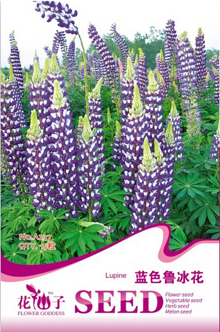 Online Buy Wholesale lupinus perennis from China lupinus ...