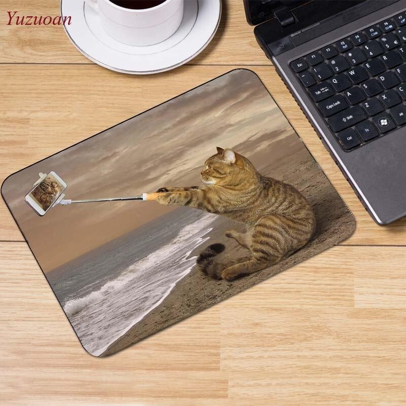 1Cats_Wood_planks_Kittens_Hat_521570_1280x854 (2)
