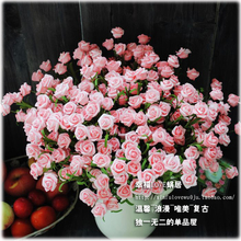 French European American country Vintage Rose 10 head rose floor living room simulation flower decoration wholesal