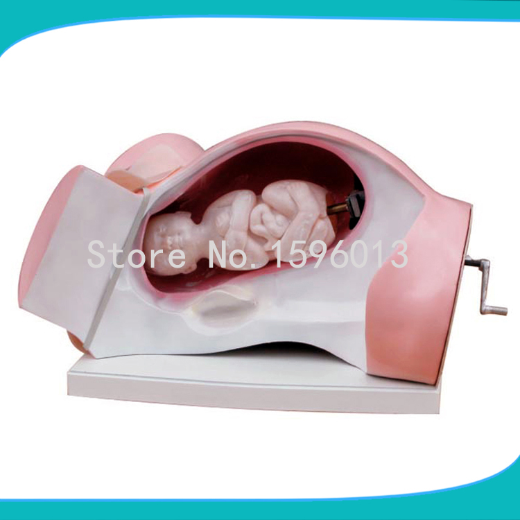 Model of Course of Delivery, Delivery Mechanism Demonstration Simulator,delivery mechanism model model of course of delivery delivery mechanism demonstration simulator delivery mechanism model