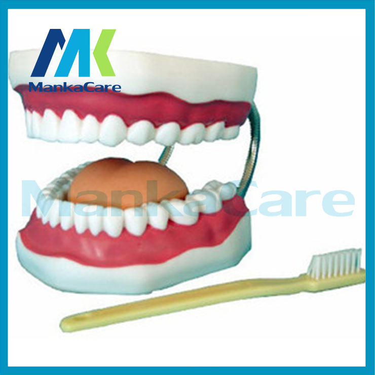 Manka Care - High Quality 6 times big teeth model dental tooth model Medical teaching tool art tools Brush teeth education tool 2017 teeth whitening oral irrigator electric teeth cleaning machine irrigador dental water flosser professional teeth care tools