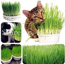 Бесплатная доставка 200 шт. трава для кошек растение травы съедобные Лимонник Кухня овощей бонсай лекарственный Применение graines бобовые potager