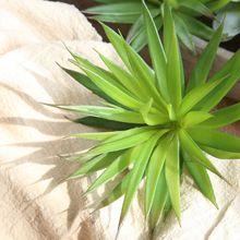 Cactus pine needle Succulent plant Artificial fleshiness lifelike microlandschaft decorative flower home Balcony decoration