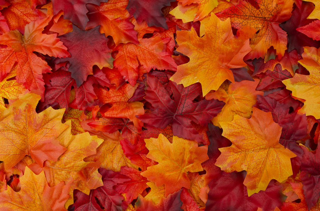 red orange autumn leaves backdrops Vinyl cloth High quality Computer print wall photography studio background