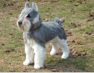 Plastique & fourrures jouet simulation Schnauzer chien modèle grand 48x40 cm gris Schnauzer chien artisanat décoration de la maison jouet cadeau de noël w5734