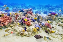 Laeacco Sea Underwater Fish Coral Scene Baby Photography Backgrounds Customized Photographic Backdrops Props For Photo Studio