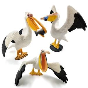 Image 5 - Đồ Chơi Hot Đại Bàng Biển Vẹt Thổ Nhĩ Kỳ Chim Nhân Vật Hành Động Nhựa Mô Hình Động Vật Vườn Cổ Tích Trang Trí Hình Tượng Một Mảnh Tặng kid
