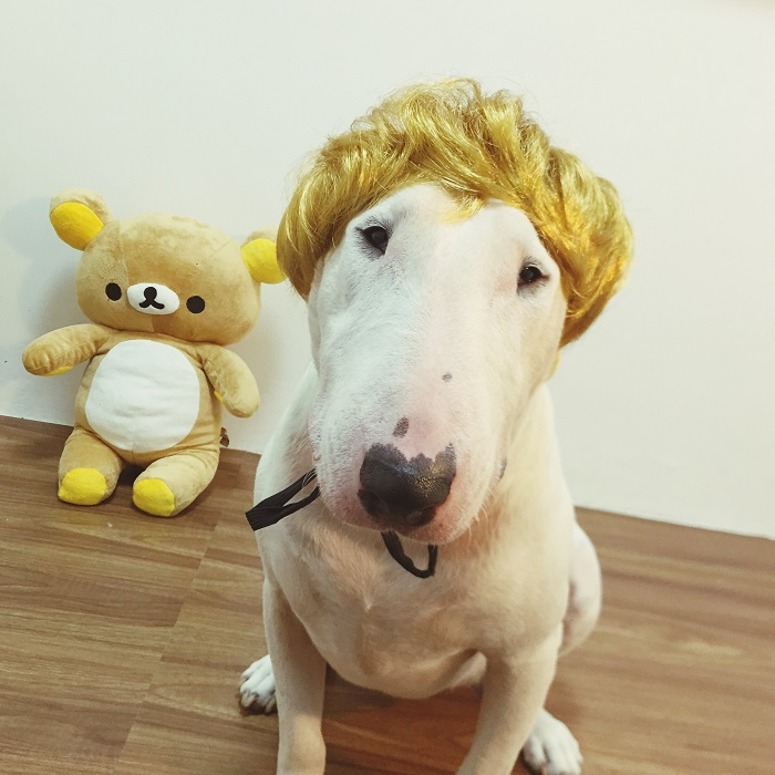[MPK Store] New Design Messy Hair Pet Wig, Dog Wig