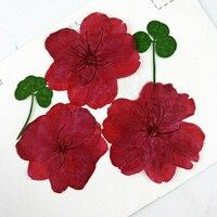 Cherry Blossoms Vỏ Điện Thoại TỰ LÀM Ép Flowers Bookmark Bưu Thiếp Herbarium 1 lot/100 cái