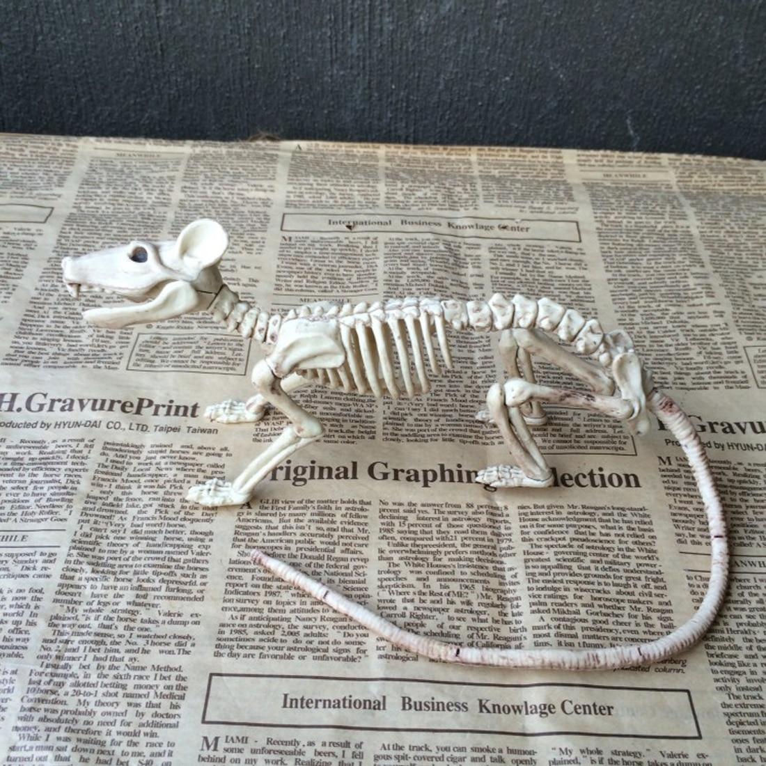 Belle Squelette Rat 100% En Plastique Animal Squelette Os pour Horreur Halloween Décoration