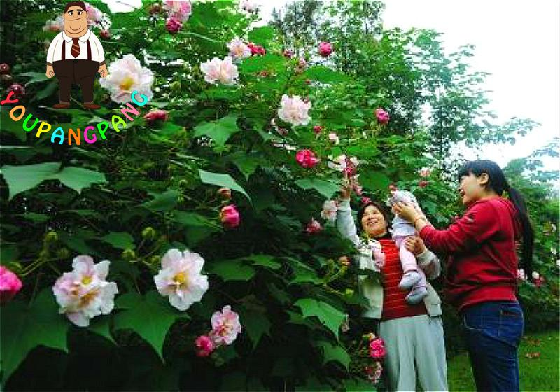 Compare Prices on Large Hibiscus- Online Shopping/Buy Low Price ...