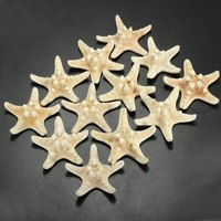 Modern 12Pcs/set White Star Fish Star Sea Animal Shell Beach Ornament for Aquarium Weddings Party Craft Gifts DIY Home Decor