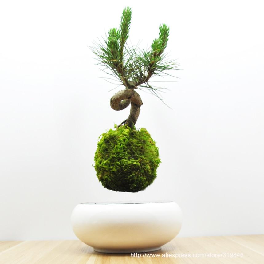 Floating Bonsai Tree Buy