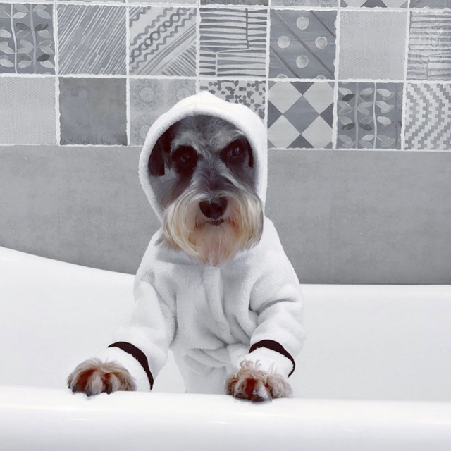e7240538d0 2018 Newest Pet Bathrobe Coral Cashmere Thickened Coats Pet Hoodie  Nightgown Dog Bathrobe Super Absorbent Towel for Dogs