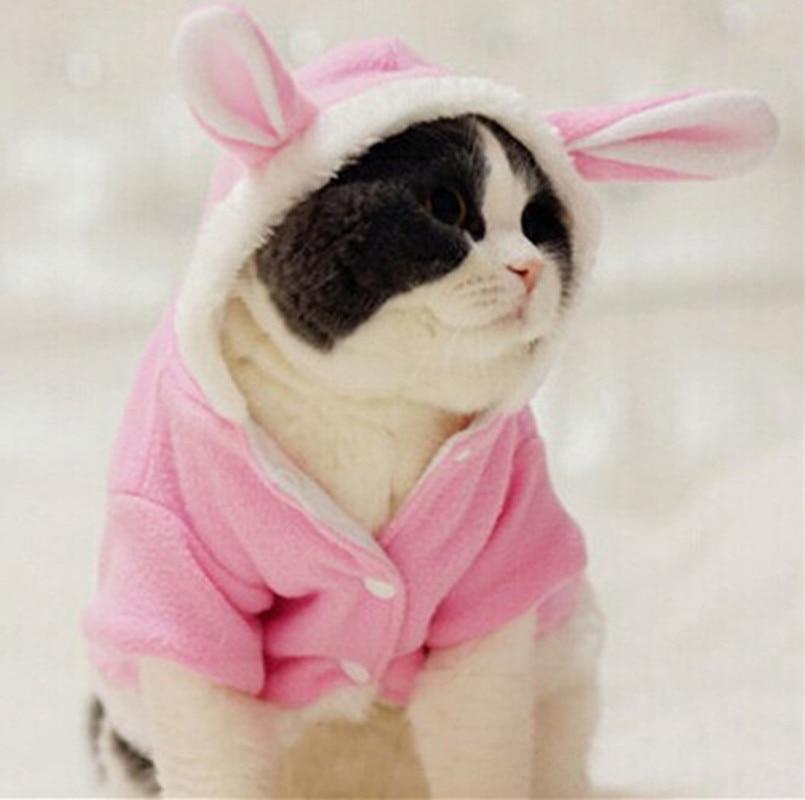 зима кошка одежда для товары для