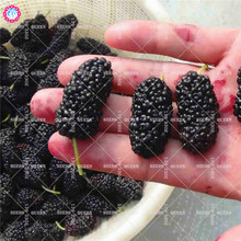 200pcs Sweet Blackberry Seeds Juicy Fruit Tree Seeds Giant Perennial Bonsai Plants for Home Farm Supplies Salad Best packaging