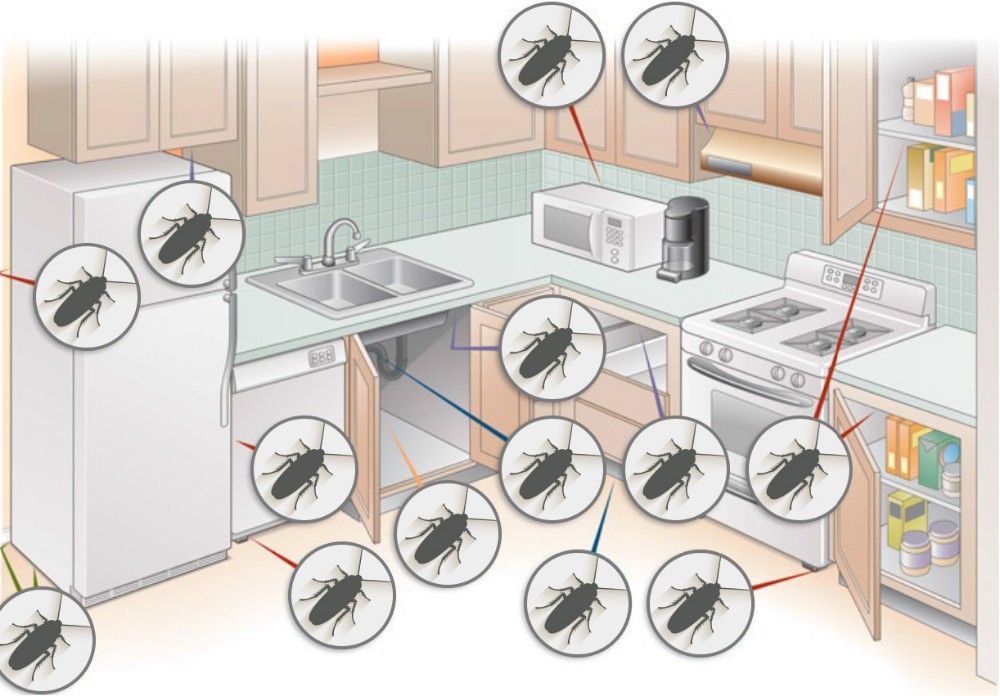 where_do_roaches_hide_diagram