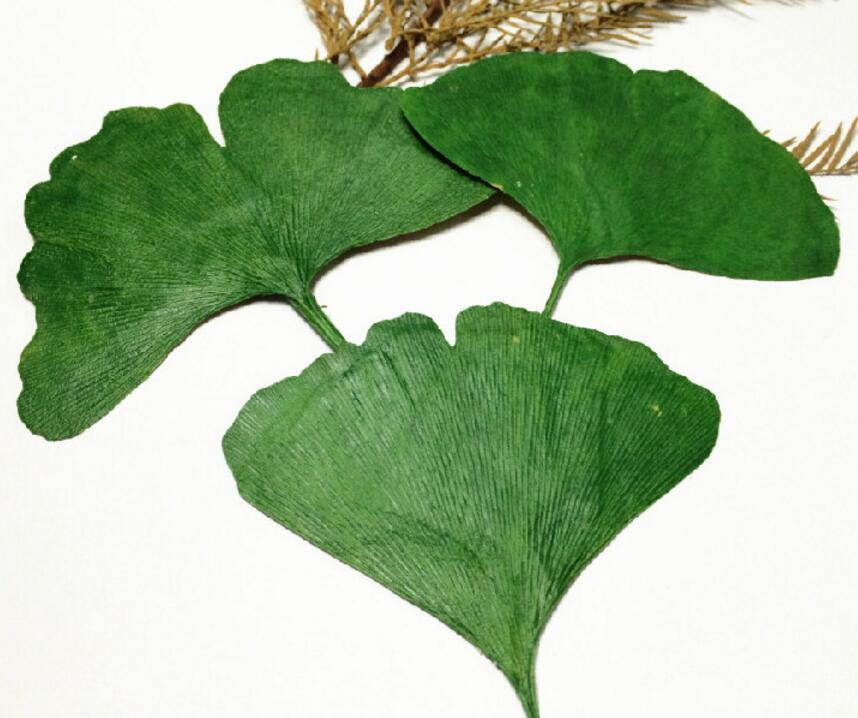 Avis Ginkgo Biloba - 10 aliments bons pour la concentration | Articles CuisineAZ