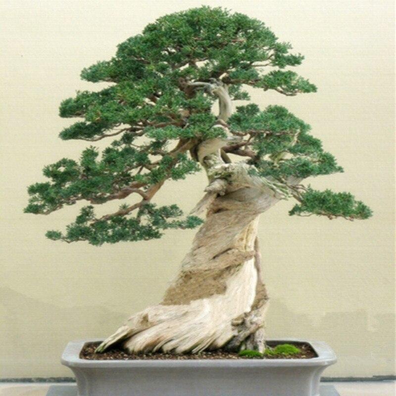 Indoor Trees. Good Online Buy Wholesale Indoor Trees From China ...