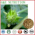 Health care products /GMP Certifcate /Tribulus terrestris extract capsule  500mg 100pcs per bag