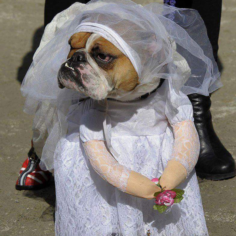 [MPK Store] Wedding Gown For Dogs, Beautiful Dog Wedding Dress, Pet Wedding Costume