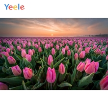 Yeele Pink Tulip Garden Sunset Glows Romantic Wedding Photography Backgrounds Customized Photographic Backdrops for Photo Studio