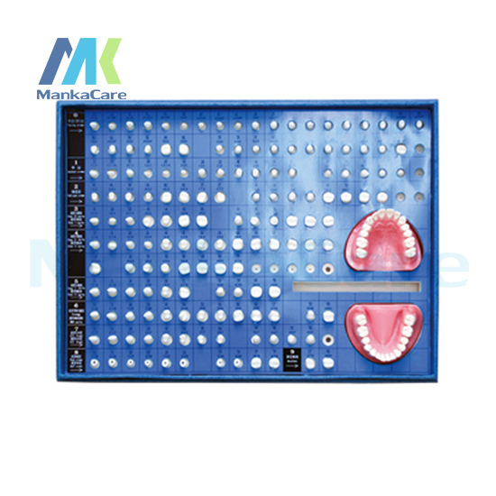 Manka Care - Teeth Preparation/ Made of imported resin/can be used for both operative dentistry and prosthodontics