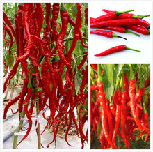 500 red pepper seeds Vegetable Plant hot chili for home garden