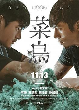 《菜鸟》2015年台湾剧情电影在线观看