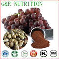 anti-aging skin care polyphenol grape seed extract 400g